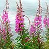 wildflower 080807_0035 2