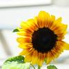 sunny 061415 667_0489