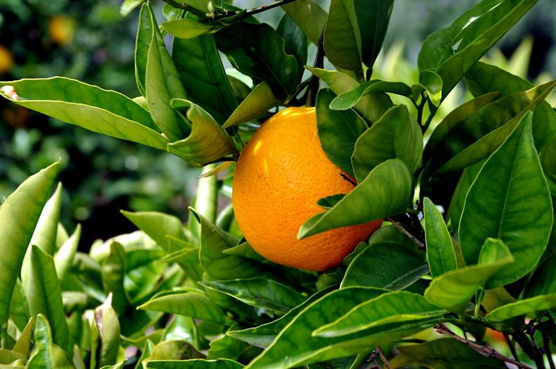 orange 41714_0644