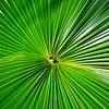 palm 030115_0214