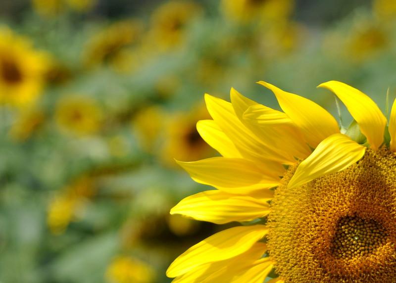 sun 92414_0700 3