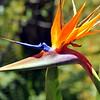 flower 41614_0191