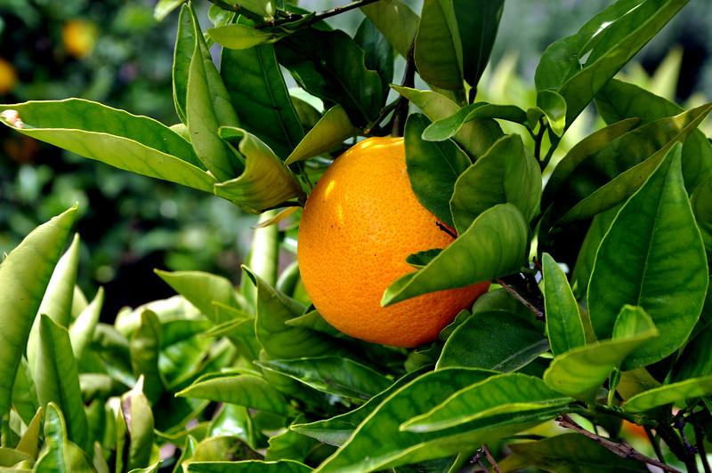 orange 41714_0644 2