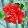 flower 030115_0547