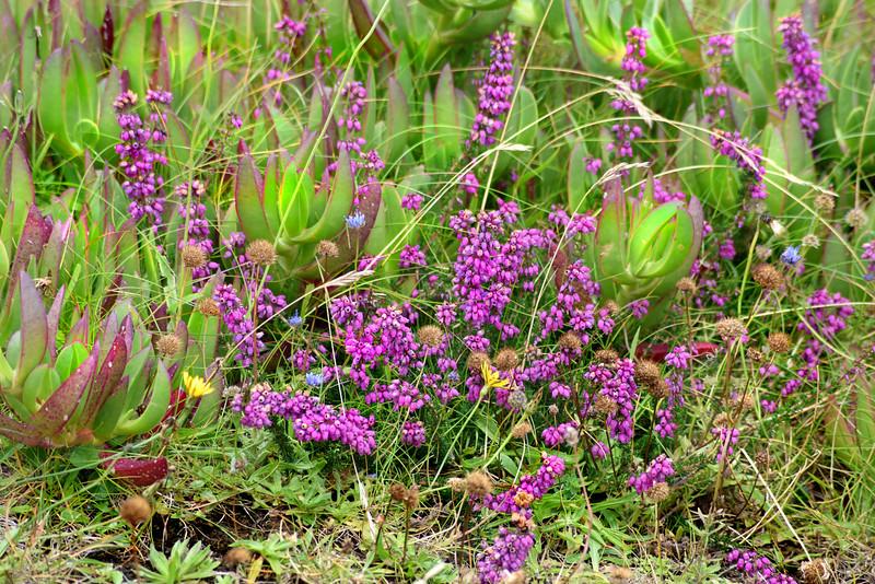 wild flowers 080415_6157e