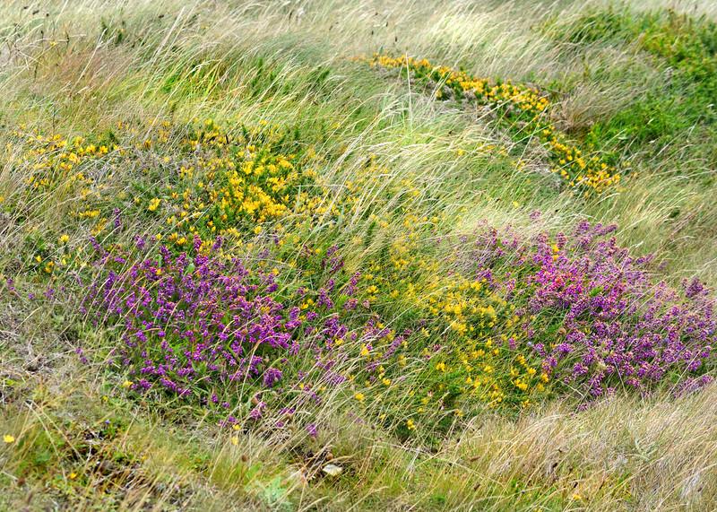 wild flowers 080415_6156e