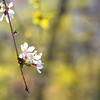 bloom 042915_1088 2