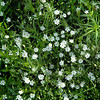 wildflower 080907_0171 2