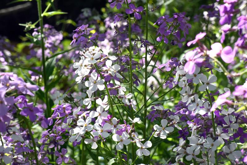 wildflowers 052315_1475