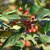 berries 122714_0076