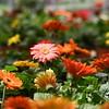 flowers 061415 667_0507