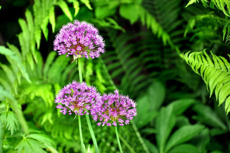 flower 051715_0583 3