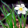 bloom 050715_1228 2