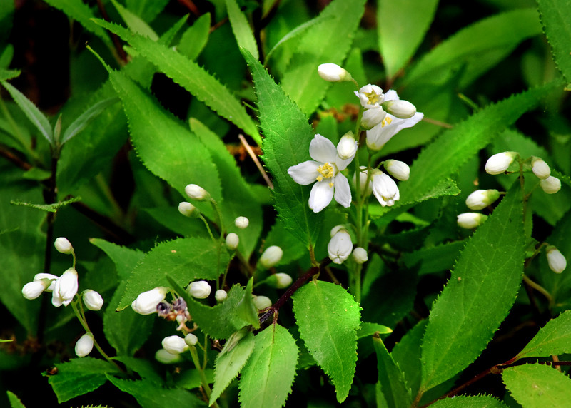 flower 051615_1406 2