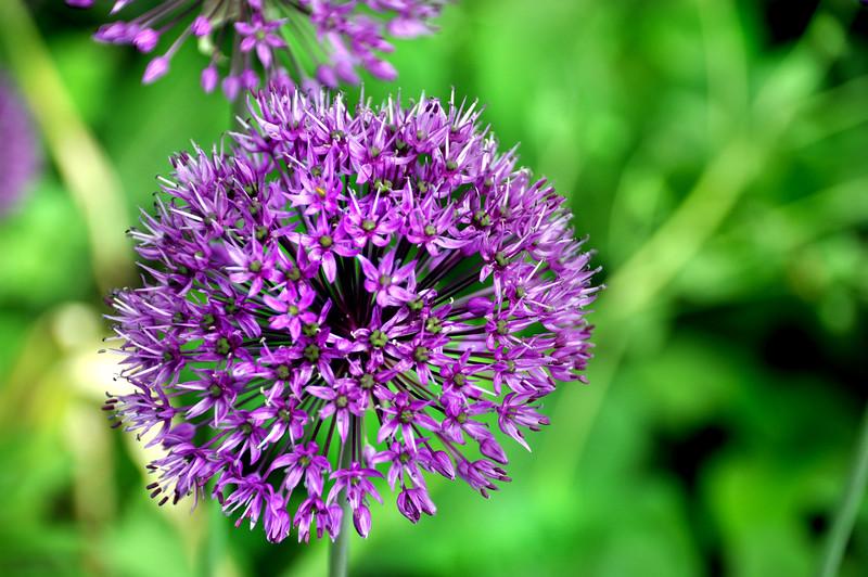 flower 051715_0585 2