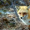 fox 030516_0733 2e