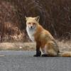 fox 030516_0723e