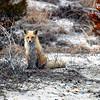 fox 030516_0822e