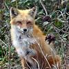 fox 030516_0691 2e