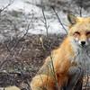 fox 030516_0748e