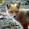 fox 030516_0624e
