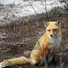fox 030516_0737e