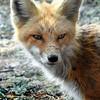 fox 030516_0624e-001