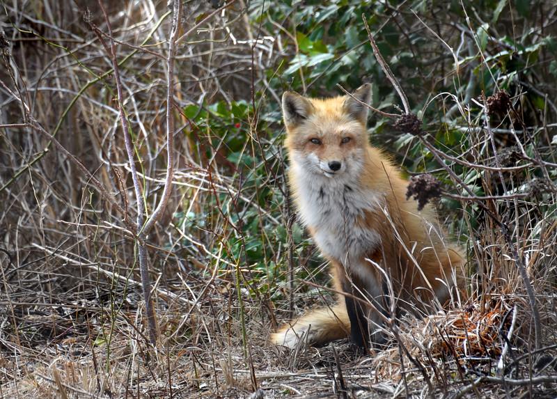 fox 030516_0690e