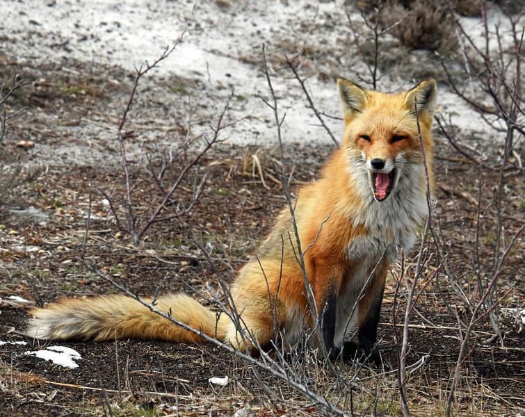 fox 030516_0740ee