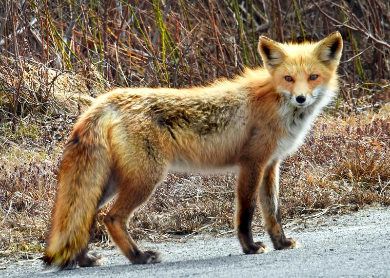 fox 030516_0575e