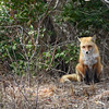 fox 030516_0695e