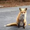 fox 030516_0604e