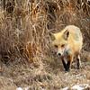 fox 030516_0586e