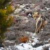 fox 030516_0650 2e