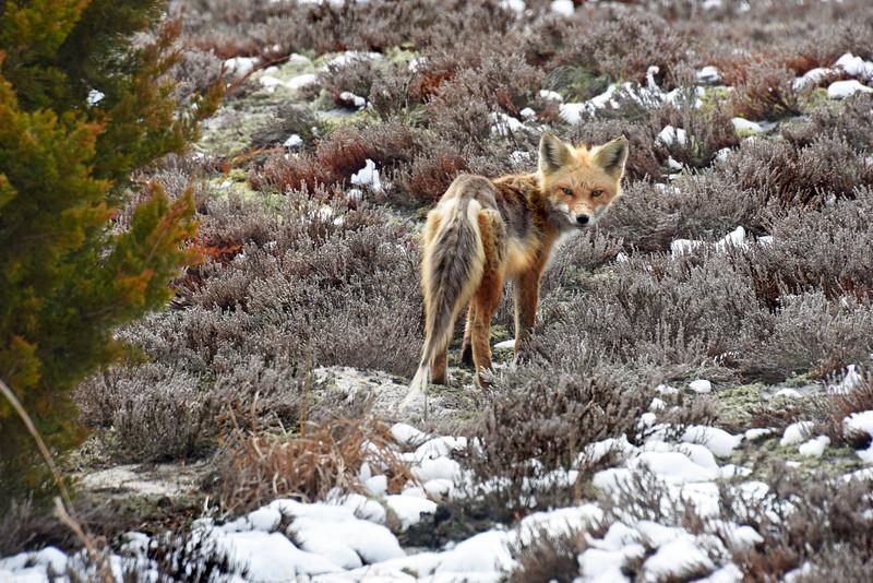 fox 030516_0654 2e