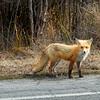 fox 030516_0568e