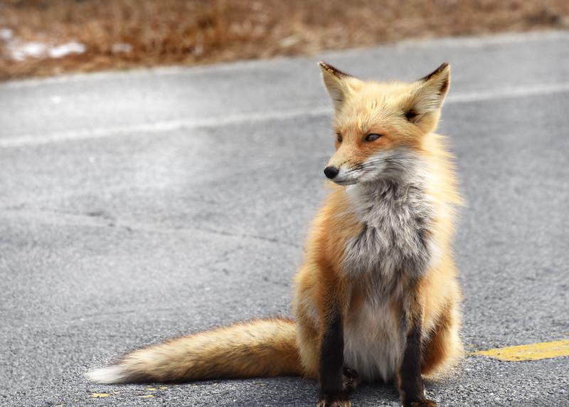 fox 030516_0600e