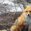 fox 030516_0748e-001