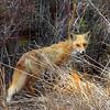 fox 030516_0553e