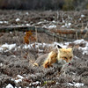 fox 030516_0672 2e