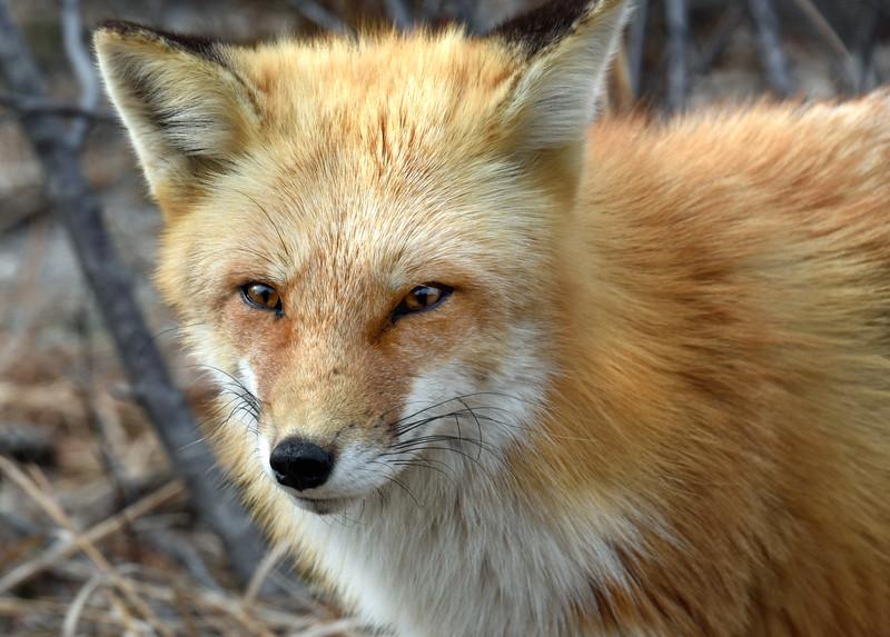 fox 030516_0733e
