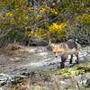 fox 030516_0613e