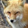 fox 030516_0735e