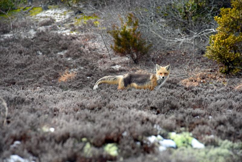 fox 030516_0684e