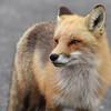 fox 030516_0852e