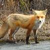 fox 030516_0568e 2