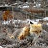 fox 030516_0672 3e