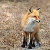 fox 030516_0756e