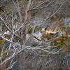 fox 030516_0825e