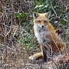 fox 030516_0691e